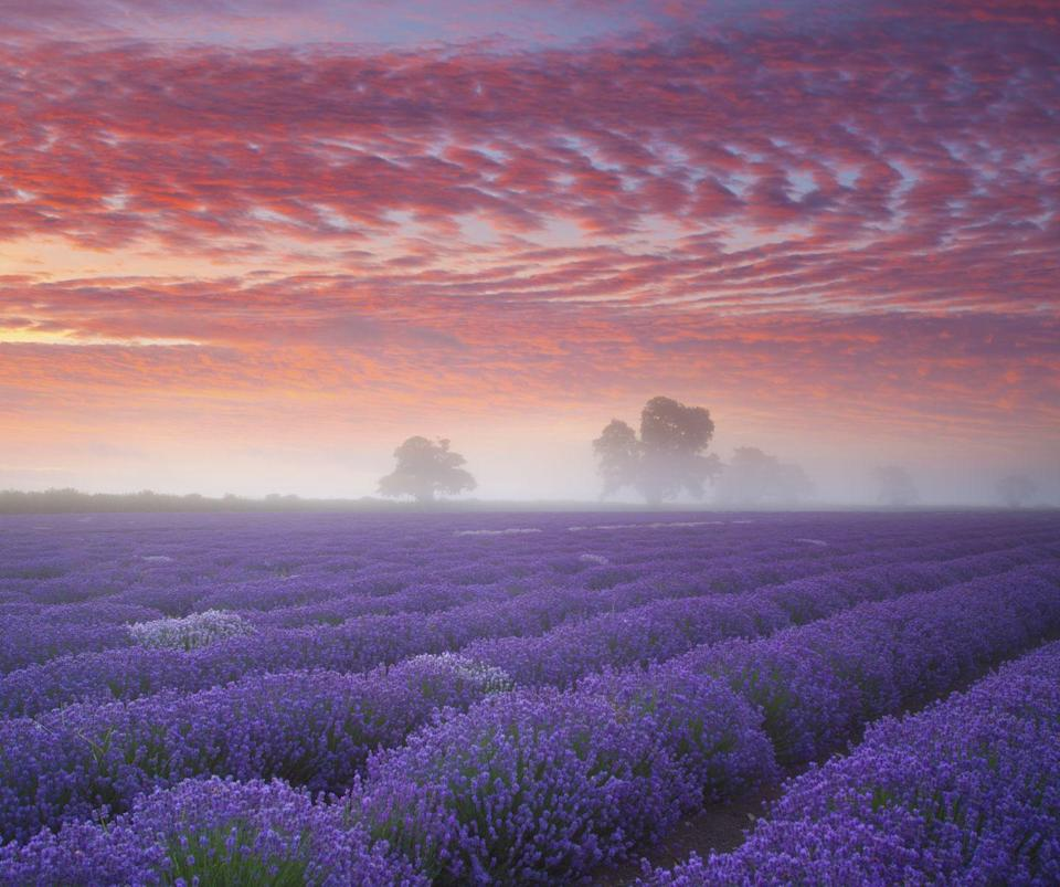 """<p>Located on the Olympic Peninsula, Sequim is known as the lavender capital of North America. If you're dreaming of the area's famed purple fields, you'll want to visit the third weekend in July for the <a href=""""https://www.lavenderfestival.com/"""" rel=""""nofollow noopener"""" target=""""_blank"""" data-ylk=""""slk:Sequim Lavender Festival Weekend"""" class=""""link rapid-noclick-resp"""">Sequim Lavender Festival Weekend</a>. And because this town gets less rain than some of its Pacific Northwest counterparts, you might even get a perfectly sunny day for your visit. </p>"""
