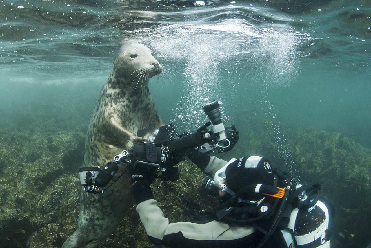<p>This playful seal pup really loves the camera — so much so that it tried to steal one. (Photo: Frogfish Photography/Caters News) </p>