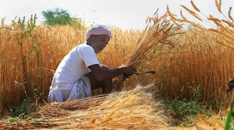 What is MSP? How Is It Calculated to Ensure Fair Remunerative Price For Farmers?