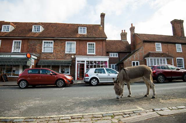 A Donkey makes it's way down the High Street in Beaulieu Village in the New Forest, which was recently voted one of the best places in the UK to live