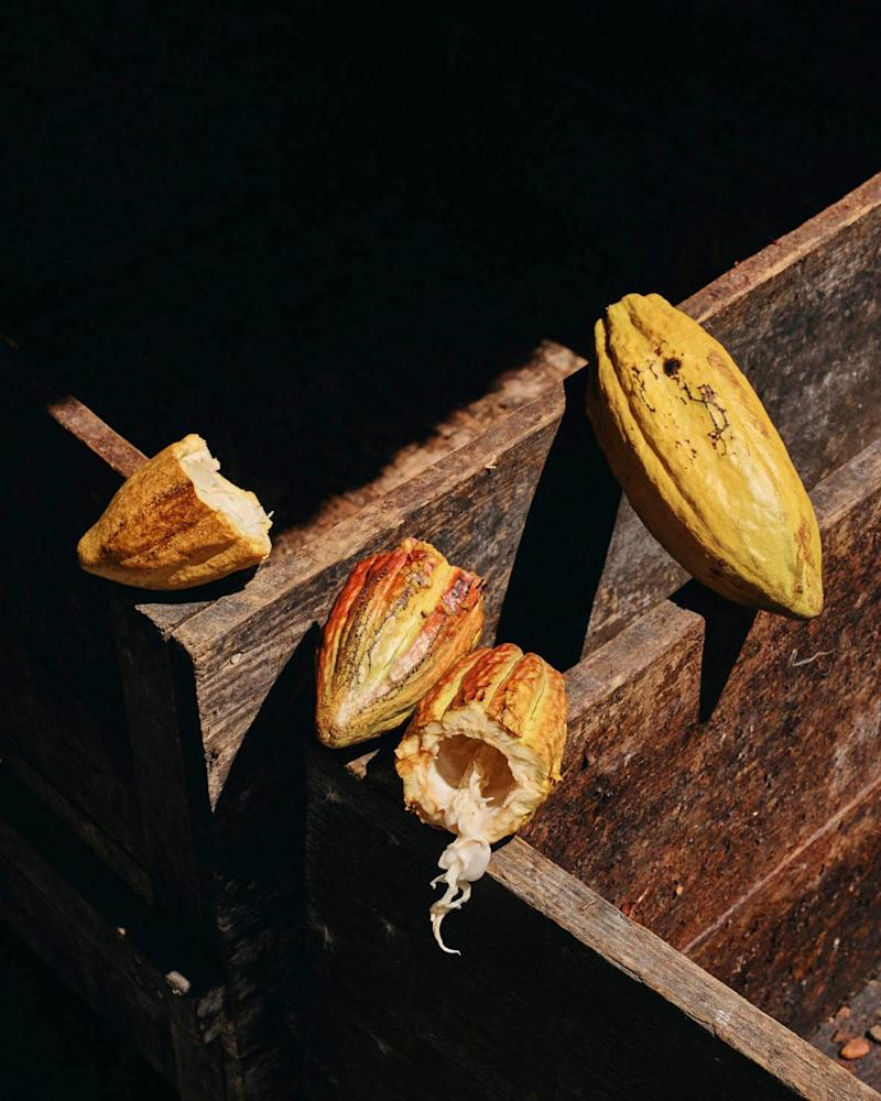 Hotel Chocolat currently have 200 St Lucian cocoa growers supplying more than 55 tons of wet beans - Credit: Ben Quinton