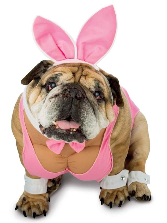 Hugh Hefner's recent death may inspire a whole rash of Halloween Playboy bunnies, but none of them hold a carrot to having <span>a canine be your playmate.</span> It's the most cuddly form of patriarchal sexism we've seen this year.