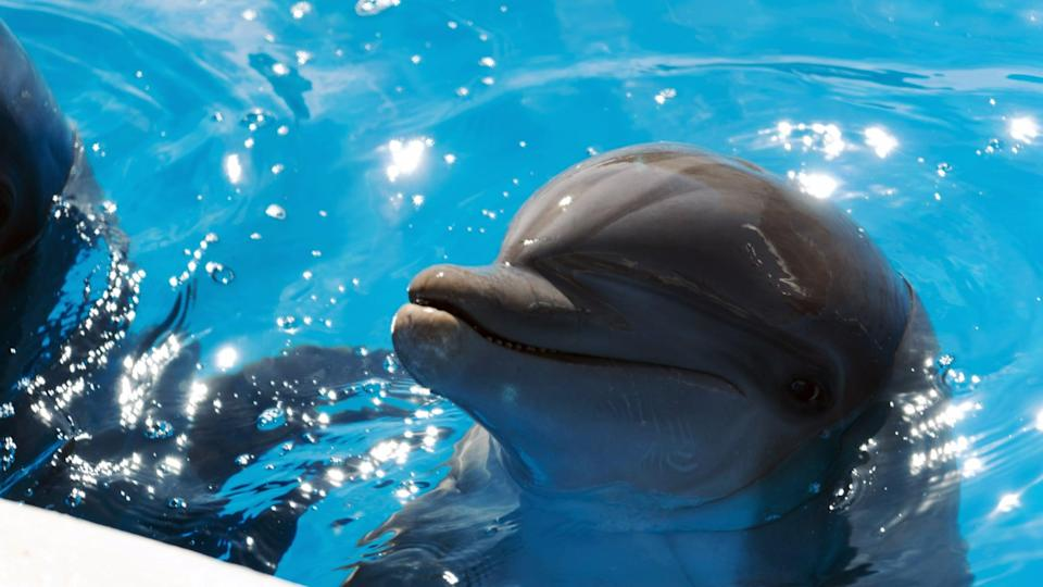 """<p><strong>Amazon's Description:</strong> """"<b>Bernie the Dolphin</b> is a family adventure about a brother and sister who befriend a badly sunburned dolphin separated from his family and uncover a secret plan that could destroy the beach and their new friend's home.""""</p> <p><a href=""""https://www.amazon.com/gp/video/detail/B07L3919RD/"""" class=""""link rapid-noclick-resp"""" rel=""""nofollow noopener"""" target=""""_blank"""" data-ylk=""""slk:Watch Bernie the Dolphin on Amazon Prime Video here!"""">Watch <strong>Bernie the Dolphin</strong> on Amazon Prime Video here!</a></p>"""