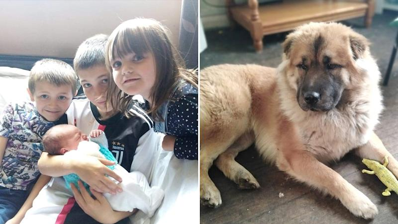 Abigail Ellis' children with their new brother Elon (left) and the family dog (right) who killed Elon.