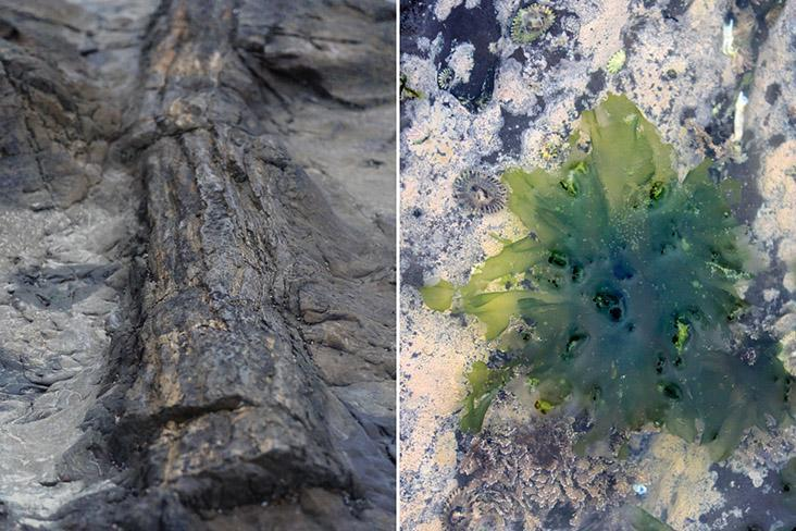 A petrified tree trunk (left) and the occasional green 'blossoms' of algae (right)