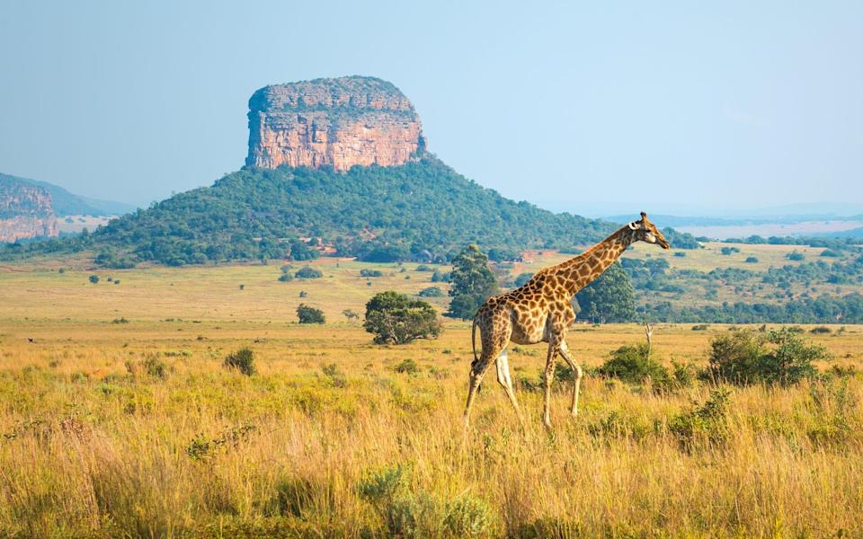 South Africa - Getty