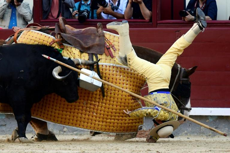 A picador falls from his horse during the San Isidro festival in Madrid