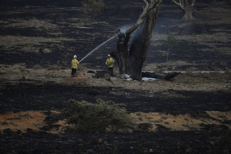 Firefighters spray water on a smouldering tree left in the wake of a bushfire near Bumbalong