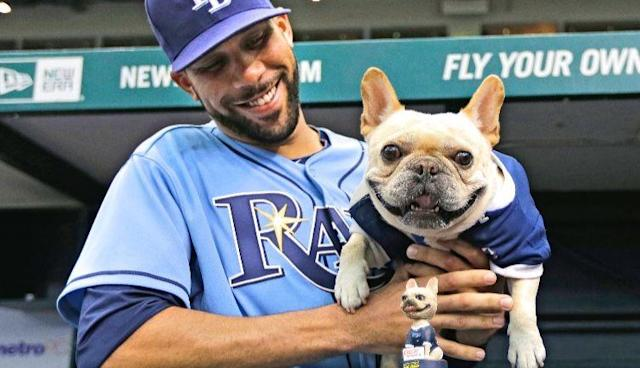 Anyone who has lost a dog knows what David Price is going through.