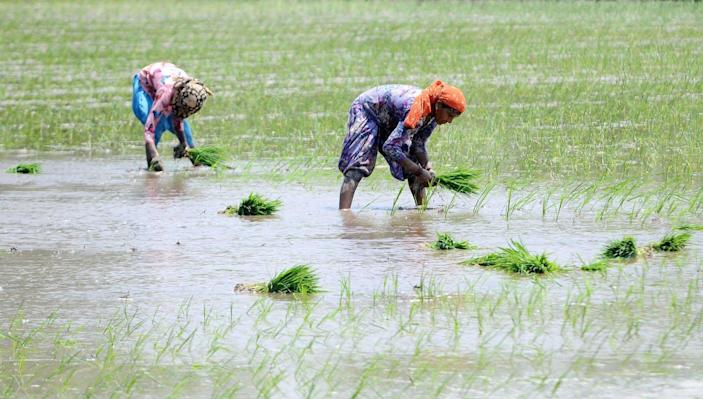 """<span class=""""caption"""">Planting paddy saplings in Patiala, India. Three-quarters of Indian farmers are women, but most don't own their land.</span> <span class=""""attribution""""><a class=""""link rapid-noclick-resp"""" href=""""https://www.gettyimages.com/detail/news-photo/women-plant-paddy-sapling-in-a-field-in-village-ramgarh-on-news-photo/1222267130?adppopup=true"""" rel=""""nofollow noopener"""" target=""""_blank"""" data-ylk=""""slk:Bharat Bhushan/Hindustan Times via Getty Images"""">Bharat Bhushan/Hindustan Times via Getty Images</a></span>"""