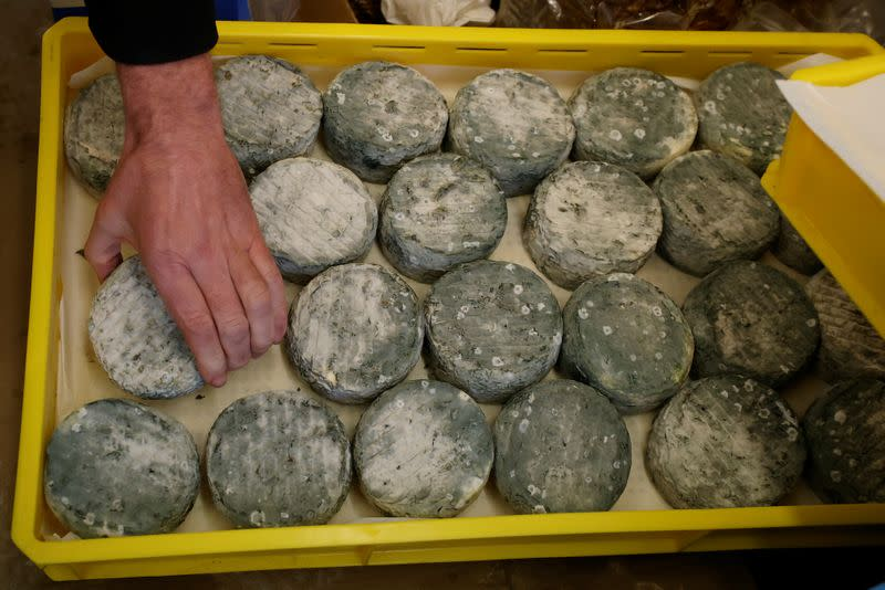 Individual Dovedale Blue cheeses are placed onto a tray in the chiller room at Hartington Creamery near Matlock