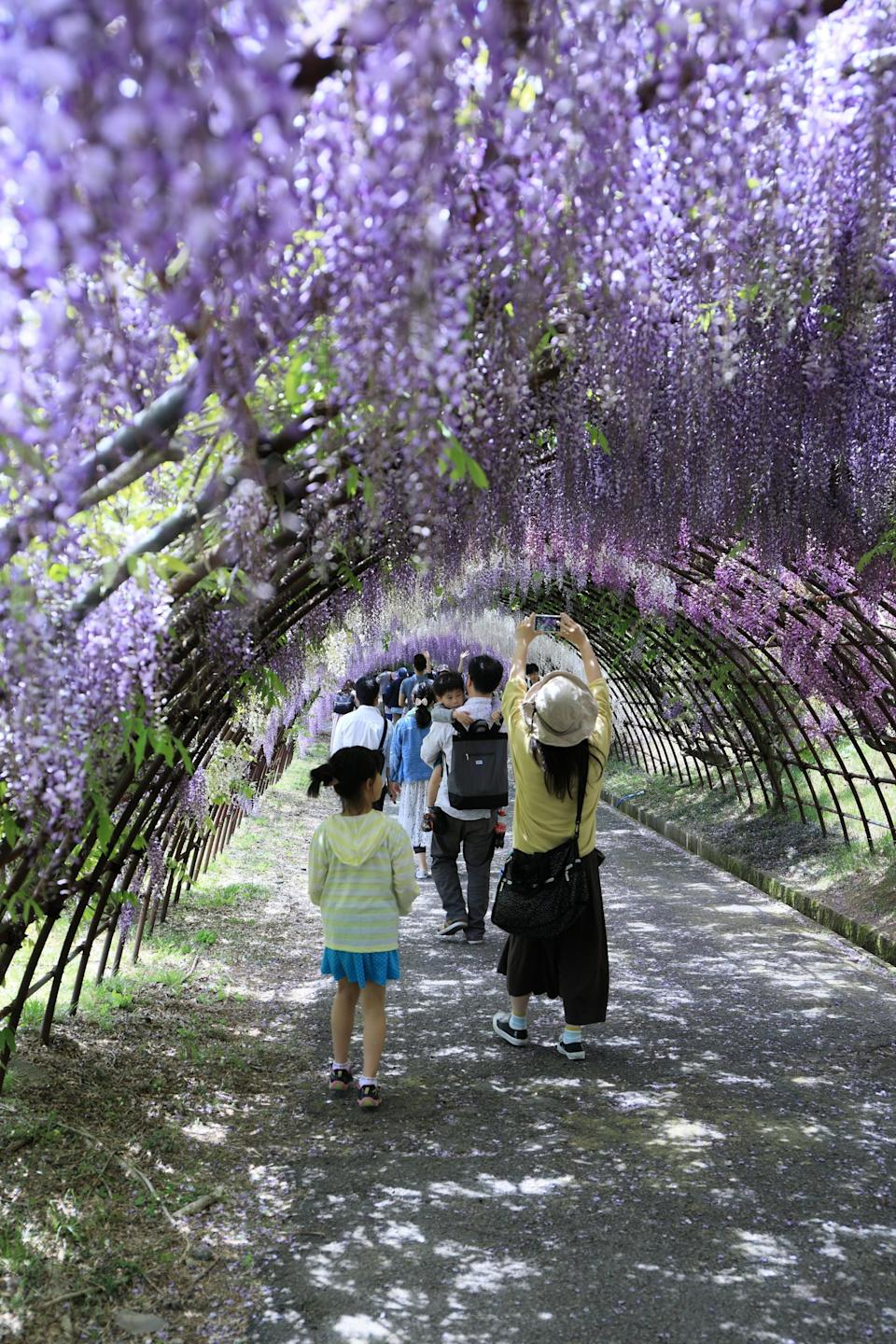 """<p>The <a href=""""https://www.popsugar.com/smart-living/Wisteria-Flower-Tunnels-Japan-43316247"""" class=""""link rapid-noclick-resp"""" rel=""""nofollow noopener"""" target=""""_blank"""" data-ylk=""""slk:wisteria flower tunnels"""">wisteria flower tunnels</a> in Kawachi Fuji Gardens are beautiful structures to take a stroll through. </p>"""