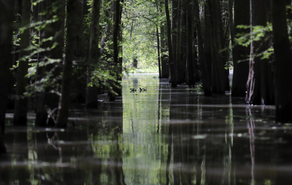 FILE - In this April 27, 2018 photo, an old logging canal cuts through Bayou Sorrel in the Atchafalaya River Basin in Louisiana. A federal judge says demonstrators and a journalist may continue their challenge of a Louisiana law making it a felony to trespass in the area of a pipeline through the Louisiana swamp. Activists said they had landowners' permission to protest on the land in the environmentally sensitive Atchafalaya Basin and have described the state law as part of a larger effort against environmental activism. (AP Photo/Gerald Herbert, File)