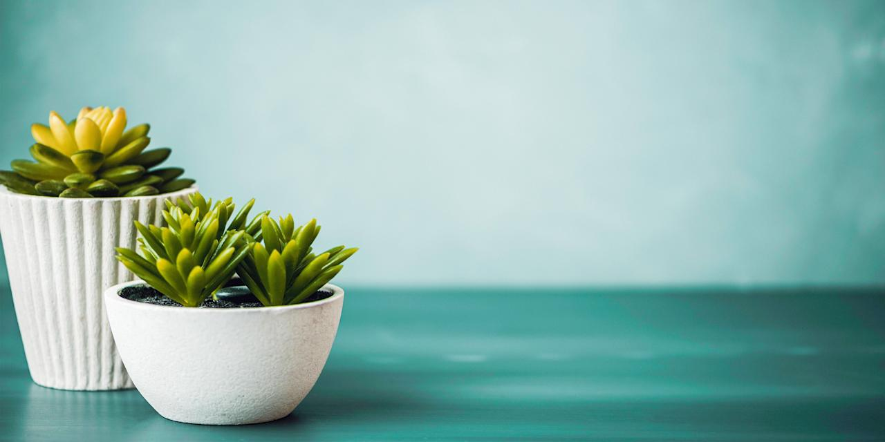 "<p>Whether you're looking to bring a bit of <a href=""https://www.goodhousekeeping.com/home/decorating-ideas/g1872/decor-ideas-kitchen/"" target=""_blank"">nature into your kitchen</a>, transform your apartment into a full-on plant jungle, or show off your green thumb at work with some cute desktop succulents, these easy-to-care-for indoor plants for sale on Amazon are some of <a href=""https://www.goodhousekeeping.com/life/money/a28035025/amazon-prime-day-2019/"" target=""_blank"">Amazon Prime Day</a>'s most superb steals. While Amazon might not be synonymous with ""garden center,"" we're pleasantly surprised by the amount of great plant deals in the <a href=""https://www.amazon.com/b?ie=UTF8&node=15280263011"" target=""_blank"">Amazon Plant Store</a>, including inexpensive indoor plants, succulents, low-light plants, and other trendy picks.<br></p><p>Many of the plants on this list come in their own pots and are <a href=""https://www.goodhousekeeping.com/holidays/gift-ideas/g225/hostess-gifts/"" target=""_blank"">perfect for gifting</a> — especially Costa Farms' <a href=""https://www.amazon.com/dp/B07KXMYYRK/"" target=""_blank"">potted succulents in a gift box</a>. If you're looking for even more plant goodness, check our guide to the <a href=""https://www.goodhousekeeping.com/home/gardening/g27210824/buy-plants-online/"" target=""_blank"">best places to buy plants online</a>, <a href=""https://www.goodhousekeeping.com/home/gardening/a20706146/air-purifying-indoor-plants/"" target=""_blank"">indoor plants that can purify your home</a>, and <a href=""https://www.goodhousekeeping.com/home/gardening/g26477167/best-indoor-trees/"" target=""_blank"">indoor trees</a> to brighten your space.</p>"