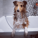 "<p>Harvey looks like he's having a great time! </p><p>Matt explains that when you're showering your dog, the temperature should always be lukewarm. ""Being able to comfortably run the water over your forearm is a sign the temperature is exactly right.""<br></p>"