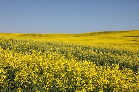 Canada takes first formal step at WTO to challenge China's canola ban