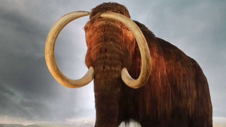 A faux woolly mammoth in a museum, in front of a backdrop of sky and mountains.