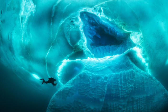 <p>Other images show some of the weird and wonderful creatures divers can encounter in that part of the ocean. (Photo: Franco Banfi/Caters News) </p>