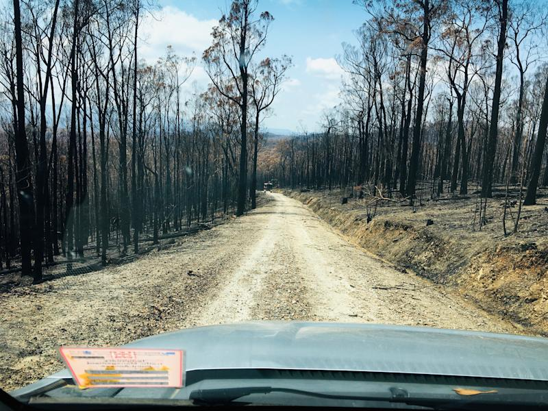 Shot through the windscreen, a road runs through a burnt out forest in East Gippsland