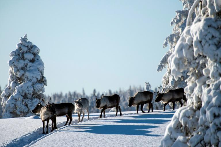Reindeer herders are forced to go further afield to find grazing, pushing up costs and taking more time