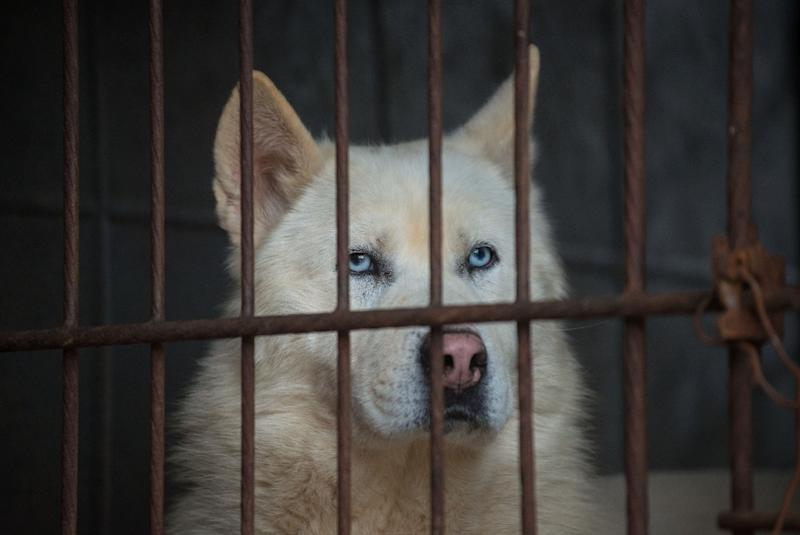 Dogs sit in a cage as they are rescued from a dog meat farm by the US-based Humane Society International in Wonju (AFP Photo/Ed Jones)