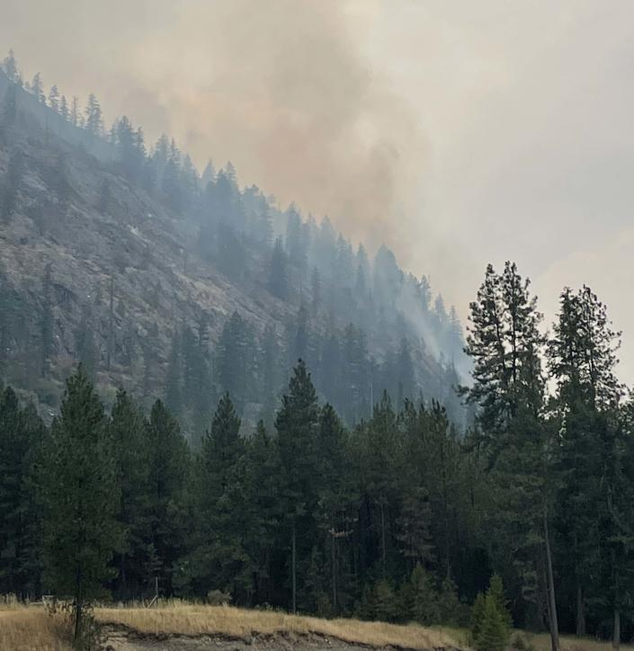 Smoke rises from the forest from active fire.