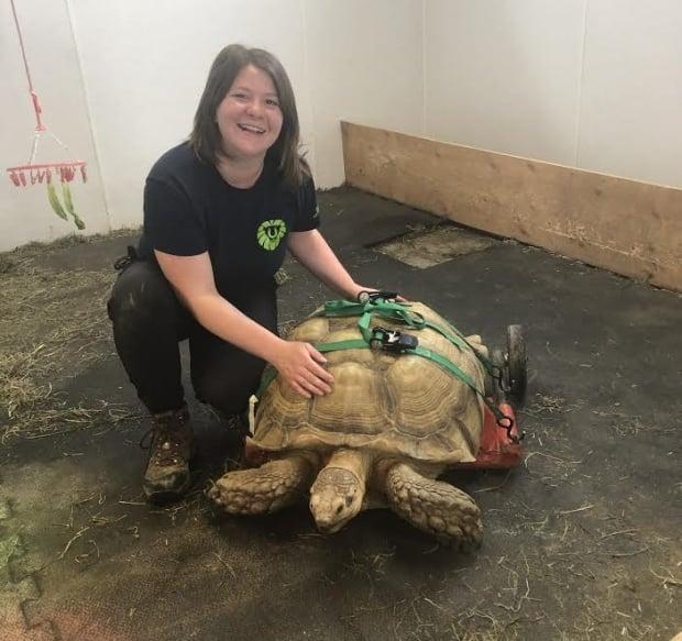 Gabrielle Jacob, a veterinarian technician at the zoo, said she noticed Sherman's mobility issues last year.