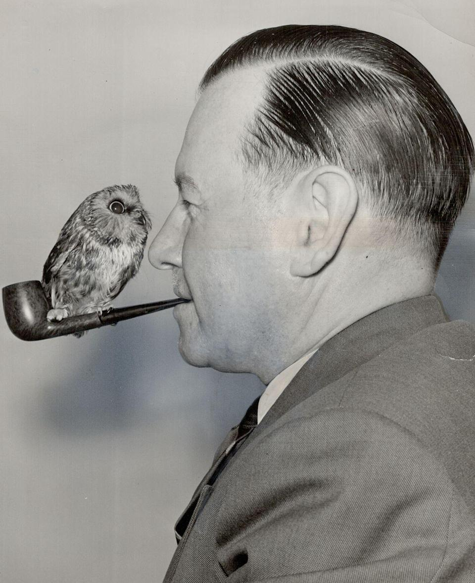 <p>The famous singer and composer, Wishart Campbell, is seen smoking a pipe in 1956 with his pet owl, Archie, perched on top. </p>