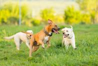 """<p>Whether or not your dog is struggling being home alone, doggie daycare is a great option to socialize and play. </p><p>""""If you are considering this option, it is important for you to visit a few different facilities in person to speak with their staff to learn what a typical day will be for your canine companion and specifically what vaccines are required,"""" Ahn says. </p><p>Just remember, not all dogs are the right fit for daycare. Some may find that it actually increases their anxiety, so don't be discouraged if this solution doesn't work out.</p>"""