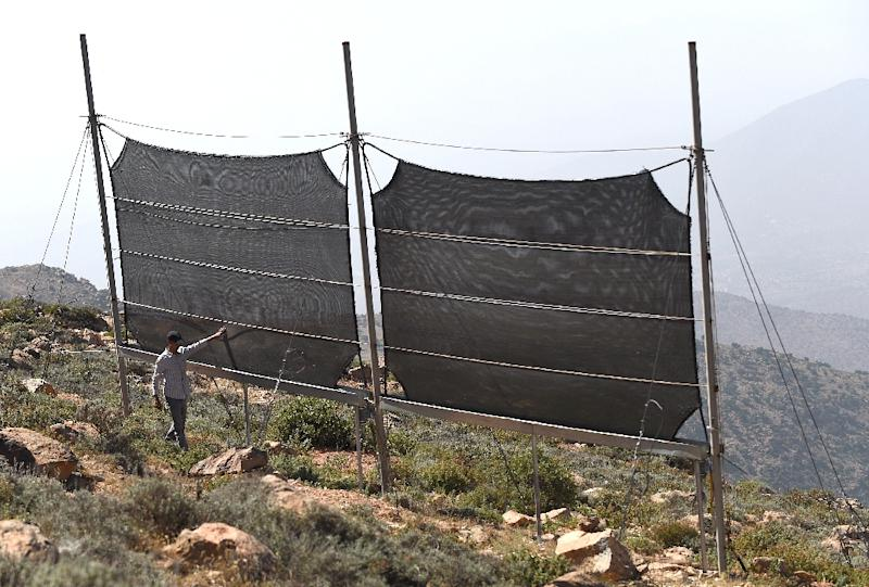 A Moroccan inspects fog fences in a hamlet on the outskirts of the southern coastal city of Sidi Ifni, on June 7, 2015 (AFP Photo/Fadel Senna)