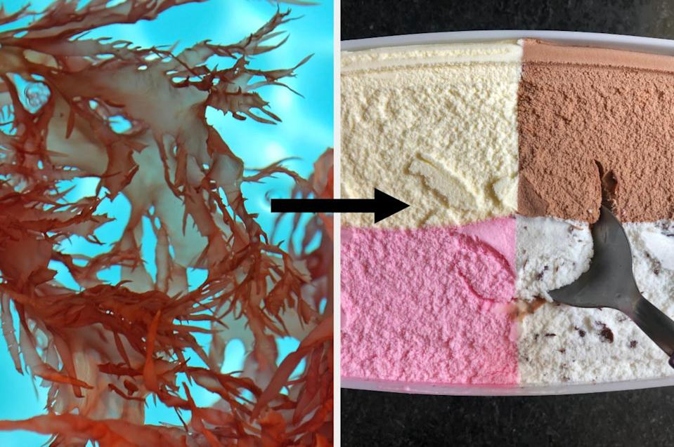 red seaweed, an arrow, and a gallon of multi-flavored ice cream