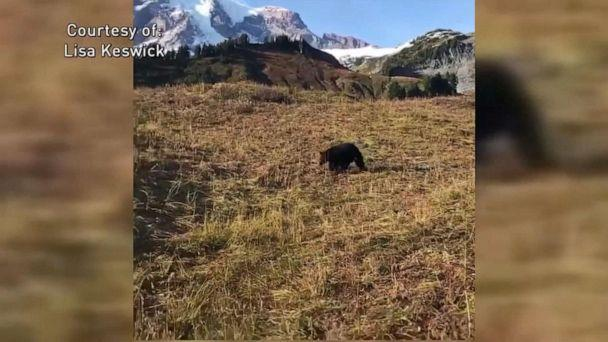 PHOTO: A woman and her brother encountered a bear on a hiking trail near Myrtle Falls at Mount Rainier National Park, Oct. 6, 2019. (Lisa Kewsick via KOMO)