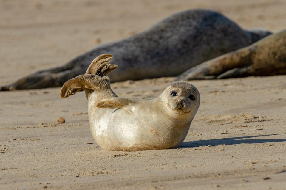 Seal pup on the beach