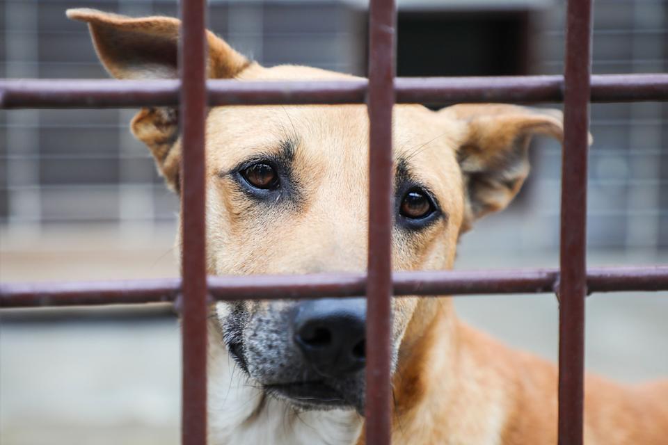 """One shelter said it has had """"an unprecedented number of returns"""" recently. (Photo: NurPhoto via Getty Images)"""
