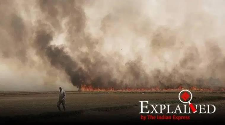 Explained: Paddy stubble burning — Why Punjab farmers are seeing red over red entries, FIRs