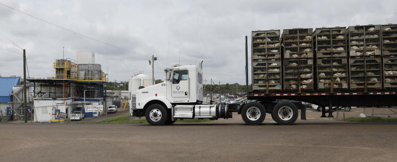 A truck loaded with chickens passes Koch Foods Inc., plant in Morton, Miss., Thursday, Aug. 8, 2019, following Wednesday's raid by U.S. immigration officials. The raids were part of a large-scale operation targeting owners as well as undocumented employees. (AP Photo/Rogelio V. Solis)