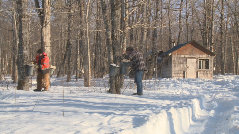 'I was the walking dead': Former addicts, criminals now making maple syrup