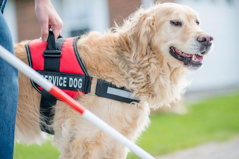 Service animals would be restricted to dogs that arespecially trained to do work or perform tasks for the benefit of a person with a disability. (Photo: FatCamera via Getty Images)