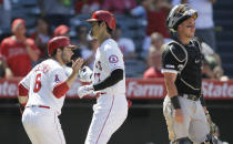 Los Angeles Angels' David Fletcher, left, congratulates designated hitter Shohei Ohtani, center, after Ohtani hit a two-run home run, with Chicago White Sox catcher James McCann, right, looking away during the seventh inning of a baseball game in Anaheim, Calif., Sunday, Aug. 18, 2019. (AP Photo/Alex Gallardo)