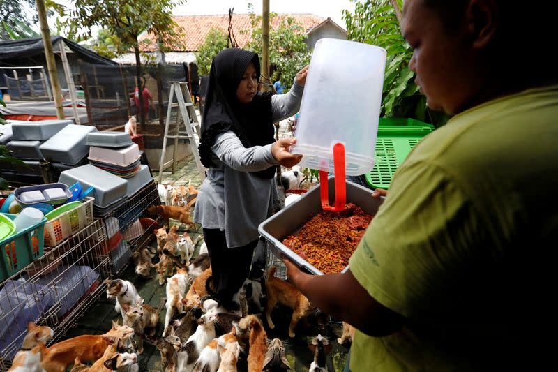 """Dita Agusta, 45, owner of a cat shelter called """"Rumah Kucing Parung"""", prepares to feed her cats in Bogor"""