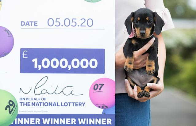 Canty had bought a miniature Dachshund puppy - now called 'Lucky Lola' - the night before. (PA)