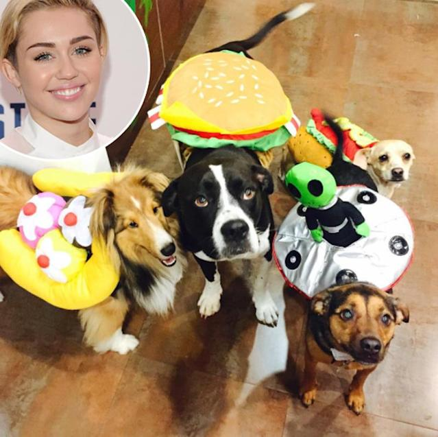 "<p>How did Miley Cyrus manage to get her pets to stay still — while wearing costumes, no less — long enough to <a href=""https://www.instagram.com/p/8CemDUQzAq/"" rel=""nofollow noopener"" target=""_blank"" data-ylk=""slk:snap a photo"" class=""link rapid-noclick-resp"">snap a photo</a>? Well, they're more than a little familiar with the drill, since she <a href=""https://www.instagram.com/p/BNztM1ghvCI/?hl=en&taken-by=mileycyrus"" rel=""nofollow noopener"" target=""_blank"" data-ylk=""slk:dresses them up for holidays"" class=""link rapid-noclick-resp"">dresses them up for holidays</a> on <a href=""https://www.instagram.com/p/BHdIKWSB2kb/?hl=en&taken-by=mileycyrus"" rel=""nofollow noopener"" target=""_blank"" data-ylk=""slk:the regular"" class=""link rapid-noclick-resp"">the regular</a>. (Photo: Instagram/Miley Cyrus; Getty Images) </p>"