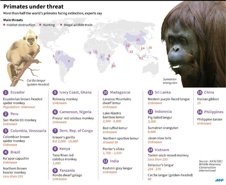 Graphic on the world's most endangered primates. 180 x 147 mm