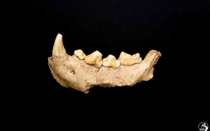 Among the finds from the cave was this fossilised jaw - Italian culture ministry