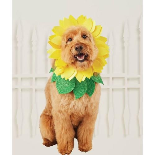 Hyde & Eeek Boutique Sunflower Dog Costume. (Photo: Target)