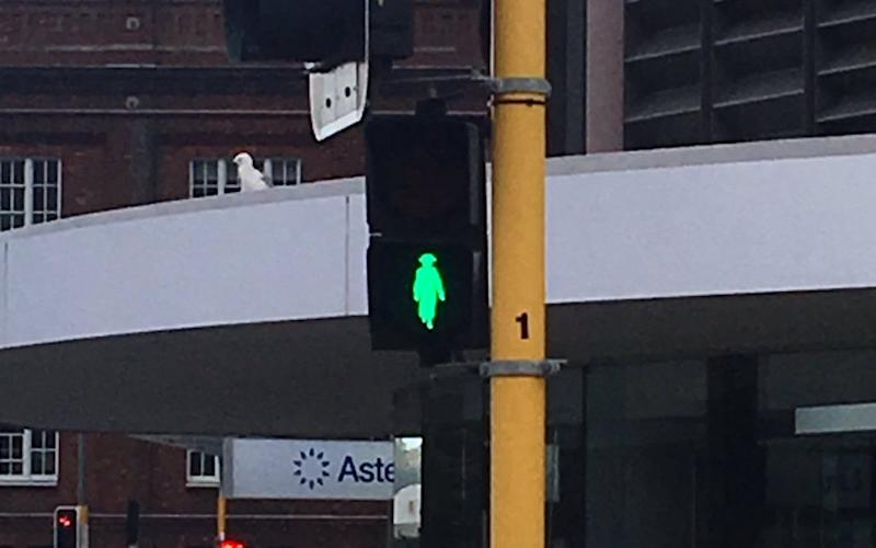 Wellington has also changed some of its traffic signals - Credit: Chris Graham