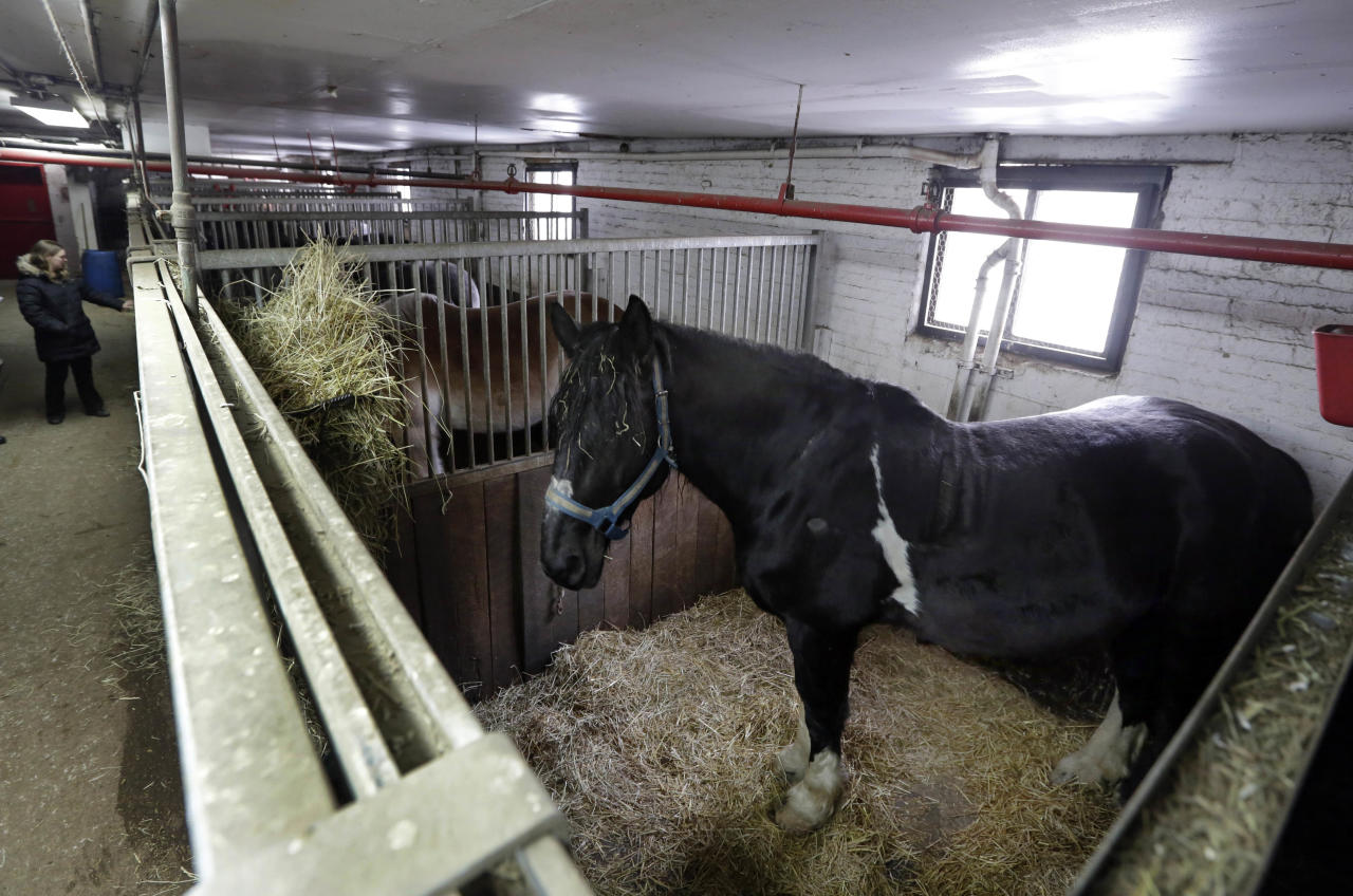 Carriage horses are housed in their stalls in New York's Clinton Stables, Jan. 28, 2014. Time may be running out for the iconic horse carriages that carry tourists around New York City's Central Park. New York Mayor Bill de Blasio has already declared his intention to shut down the industry, saying it is inhumane to keep horses in modern-day Manhattan. (AP Photo/Richard Drew)