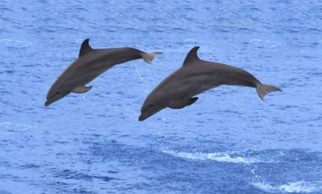 Dolphins have retractable, hand-like, penises that grope around for potential mates. Not so cute now are they?