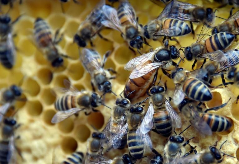New Zealanders want to secure protected status for honey labelled manuka, in the same way France did with Champagne and Portugal did with its Porto wine