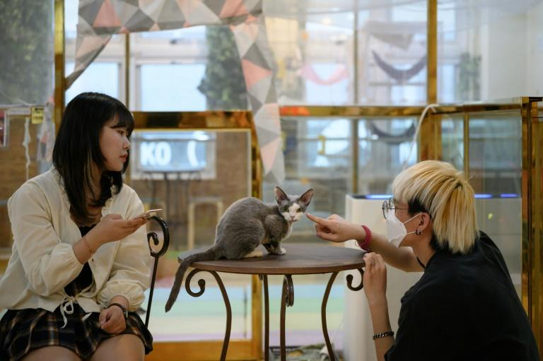 Animal lovers who are not able to keep pets at home come to the cafes to relax (AFP Photo/Ed JONES)